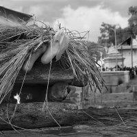 Непал. Землетрясение. Похороны. :: Павел Байдалов