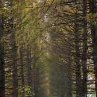 Осень в Ботаническом саду :: Татьяна Грищук
