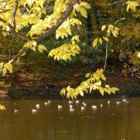 Осень, приятна мне твоя прощальная краса, 4 :: Kostas Slivskis