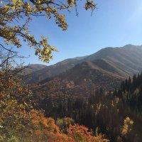 Октябрь в горах. :: Anna Gornostayeva