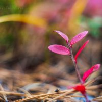 Осень :: Фотостудия Объективность
