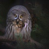 Лесной дух :: Виталий Внимательный.