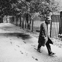 Первый снег :: alex_belkin Алексей Белкин