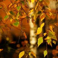 Осень наступила :: Наталья