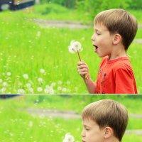 Summer. Dandelions... :: Ксения Старикова