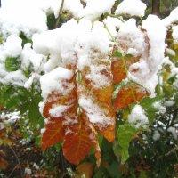 ранний снег :: tgtyjdrf