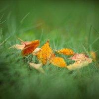 Вспоиная осень :: Дмитрий Арно