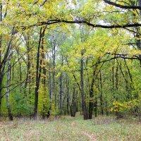 Тропинка в осеннем лесу. :: Борис Митрохин