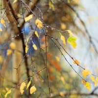 Осенний дождь :: Евгения Языкова