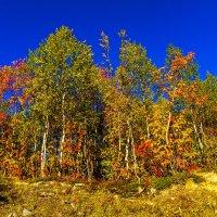 Золотая осень :: Александр Неустроев