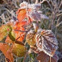 Художница Осень :: Ольга Логачева