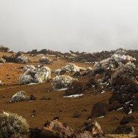Снег на Тенерифе... :: Александр Манько