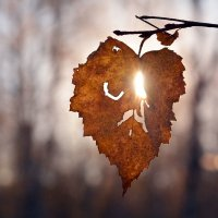 Природы  увядание :: Геннадий Супрун
