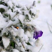 Холодно.... :: Елена Laskova
