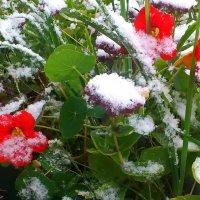 А что дальше, а дальше зима ... :: Маргарита ( Марта ) Дрожжина