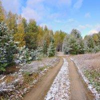Первый снег. :: Hаталья Беклова