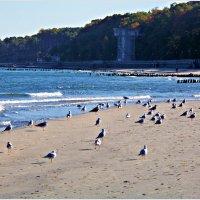 Чайки на берегу. :: Валерия Комова