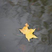 Одиночное плавание.... :: Tatiana Markova