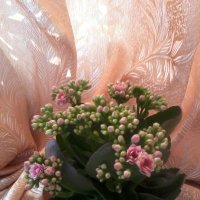 Каланхое цветет :: Галина
