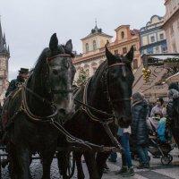 Прага :: Ксения Хмелевская