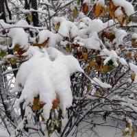 Снежные барашки. :: Елизавета Успенская