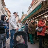 Однажды на базаре :: Ксения Хмелевская