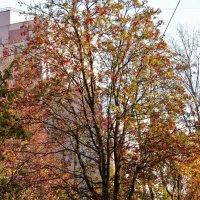 autumn :: Юлия Денискина