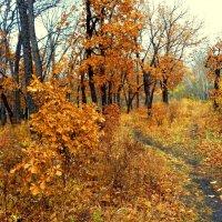 Дубки заброшенного парка :: Милла Корн