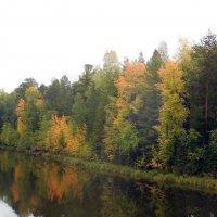 Расцветила осень лес на берегу :: Наталья Пендюк Пендюк