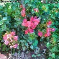 Куст декоративных роз :: Юрий А. Денисов