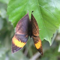 Через секунду она превратится в листик-бабочку...Супермаскировка! :: Татьяна Латышева