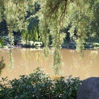 Пруд в парке :: Igor Gavrilov