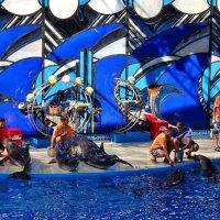 Вместе с дельфинами :: СветЛана D