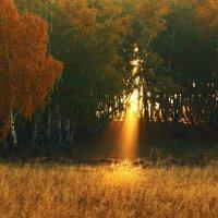 Осень прошлого года :: Elina Bagi