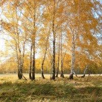 Осенний лес. :: Прима Игорь Кондратьевич