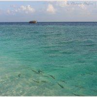 Мальдивы 10 :: Ekaterina Stafford