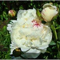 Глаза радуются весне :: Лидия (naum.lidiya)