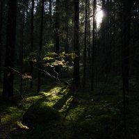 Луч света в темном царстве :: Михаил Вандич