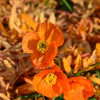 Оранжевое настроение :: Ольга
