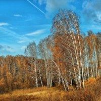Уже листья опадают :: Дмитрий Конев