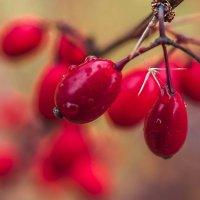 краски осени :: Лариса Батурова