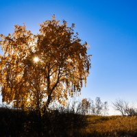 Осень золотая. :: юрий Амосов