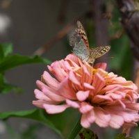 На цветке :: Evelina Alevina