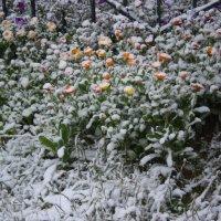 Первый снег. :: Андрей