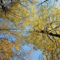 Уж небо осенью... :: Наталья Лунева