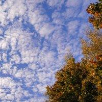 Небо октября. :: сергей лебедев