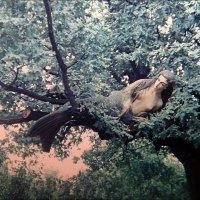Русалка на ветвях... Симферополь, Пионерский парк.   1978 год :: Нина Корешкова