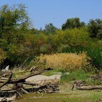 В начале каждого лета тут бежит полноценная река :: Игорь Сикорский