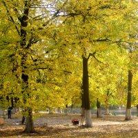 Золотой осенью в городе :: Елена Семигина