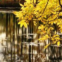 Листва и вода. :: Владимир Гилясев